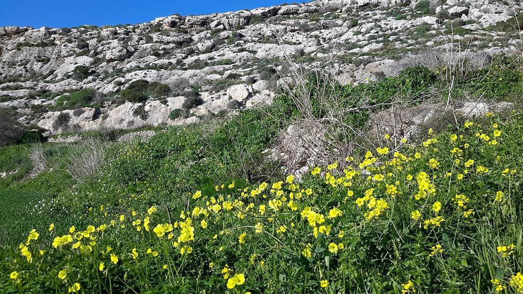 Gozo walks