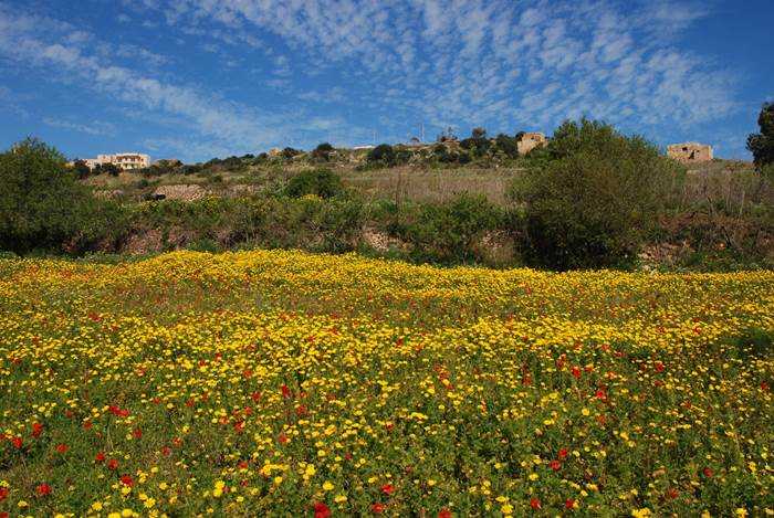 Enjoy great views while discovering Gozo by bike