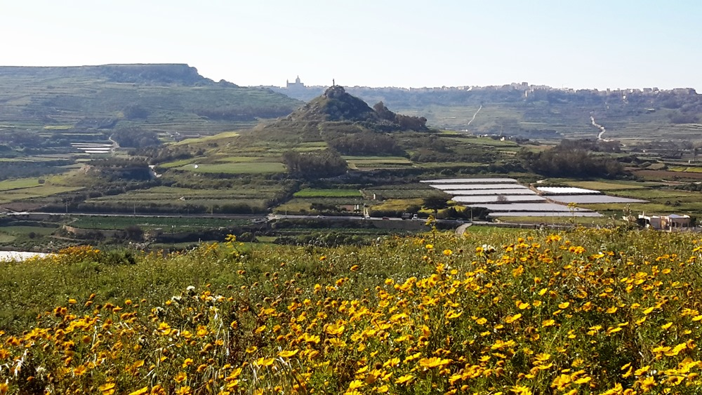 Gozo walks pdf