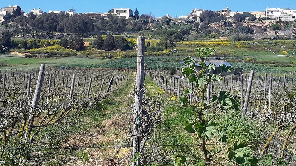 Walks in Gozo