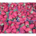 Strawberries Festival Malta