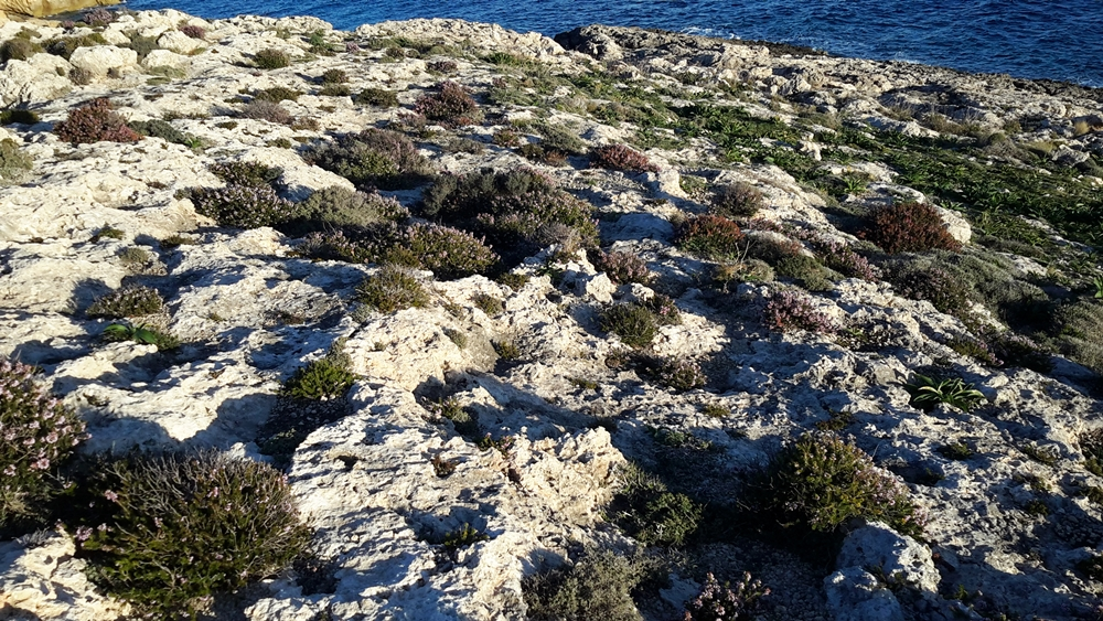 Coastal walks Gozo Malta wilderness