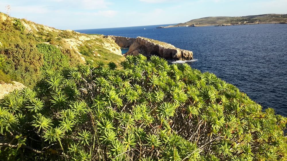 Walking holidays Malta Gozo